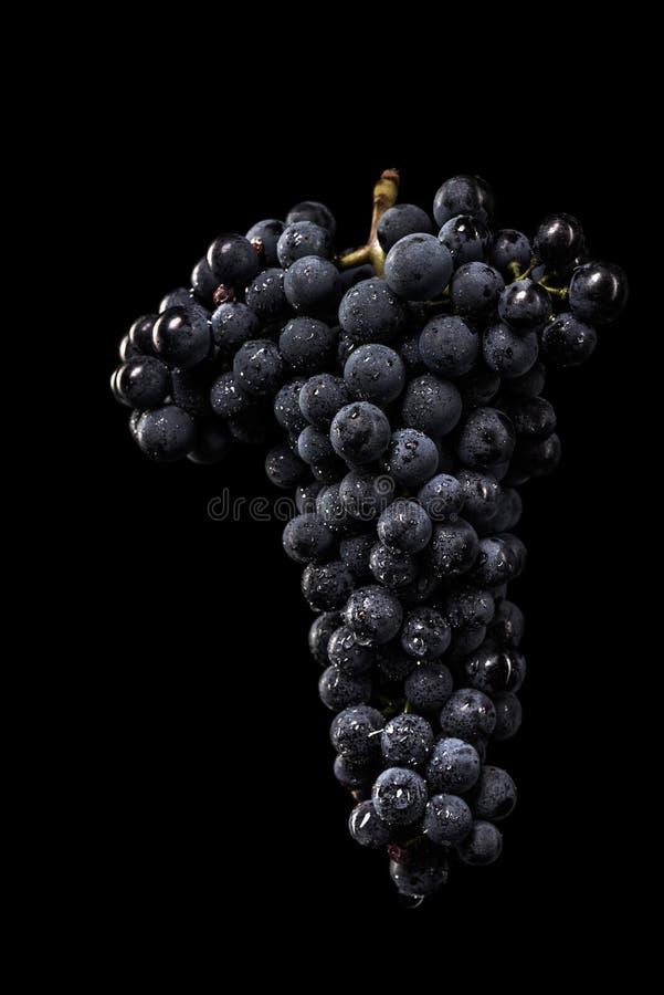 Ciemna wiązka winogrono w niskim świetle na czarnym odosobnionym tle, makro- strzał, woda opuszcza zdjęcie stock