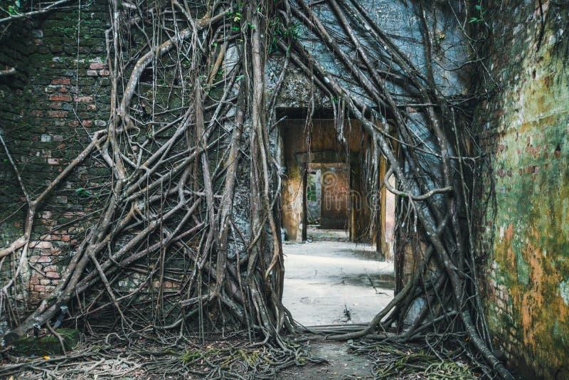 ciemne wejście ruiny przerastać z korzeniami dusiciel figi drzewa fotografia royalty free