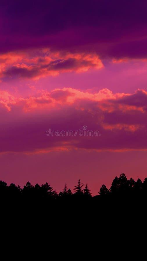 Ciemnego koloru zmierzch chmurnieje fotografię z sylwetką sosnowy las obraz stock