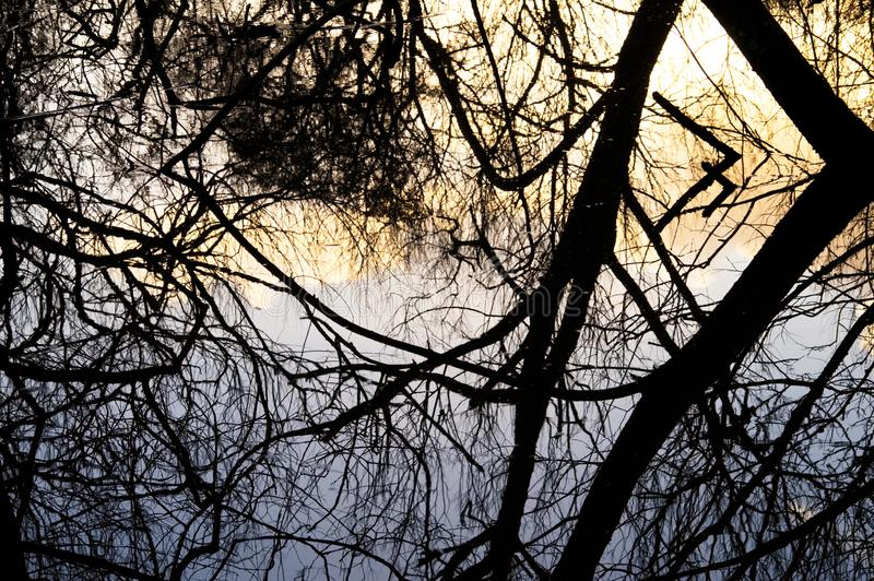 Ciemni Drzewni odbicia na Wczesnych wiosna basenach obraz royalty free