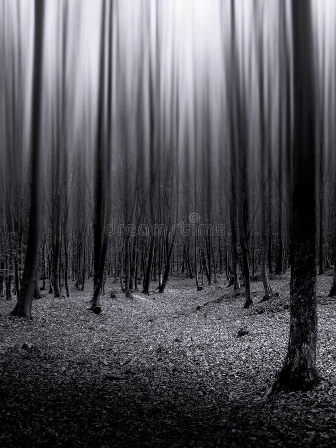 ciemni lasowi nieskończeni drzewa
