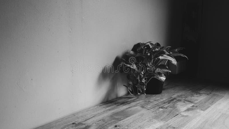 ciemność fotografia stock