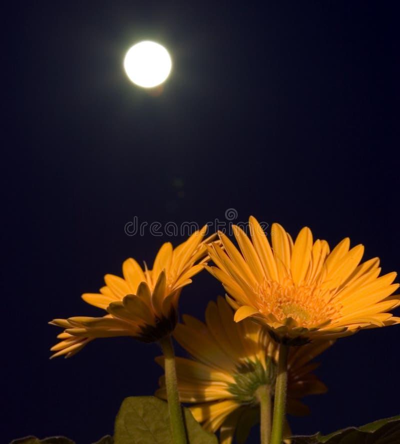 ciemność kwiaty obrazy stock