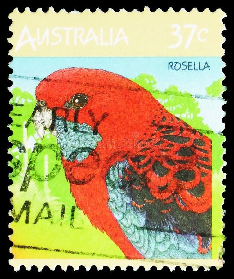 Ciemnopąsowi Rosella Platycercus elegans, Australijski przyrody seria około 1987, obraz stock