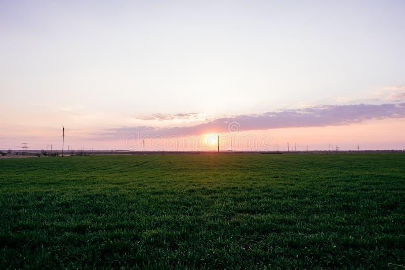 Ciemnozielony trawy pola krajobrazu zmierzchu słońca światła półmrok zdjęcie stock