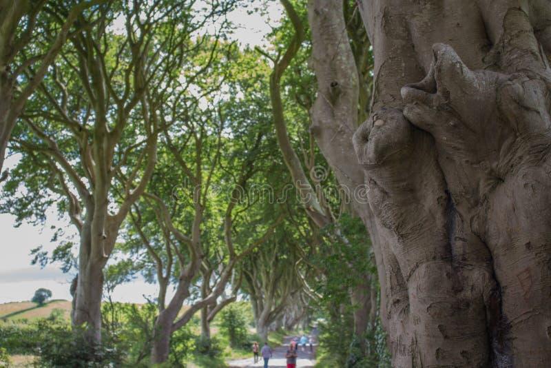 Ciemny żywopłotu drzewa zbliżenie zdjęcia stock