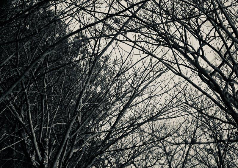 Ciemny drzewo i rośliny odizolowywaliśmy naturalnego przedmiota fotografię zdjęcia stock
