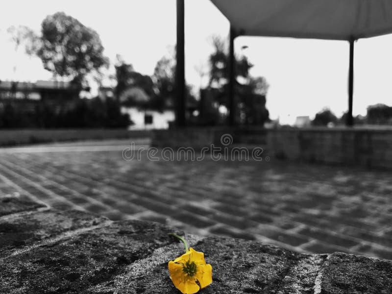 ciemny kwiat fotografia royalty free