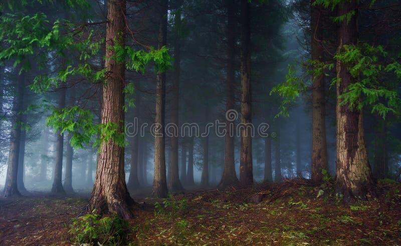 ciemny las obrazy royalty free