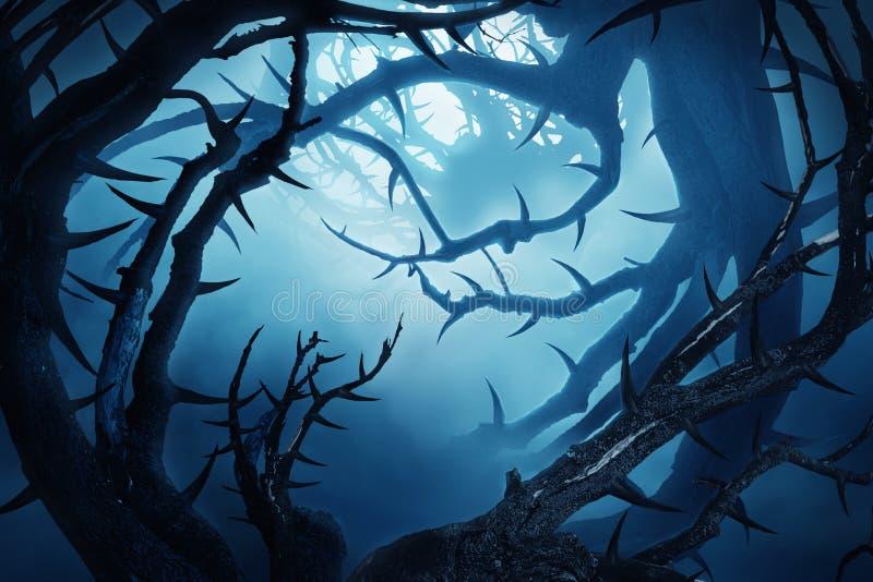 Ciemny las z cierniowatymi krzakami