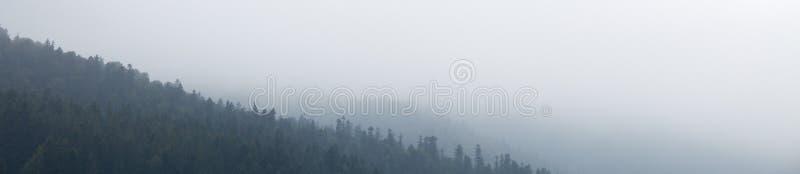 Ciemny mgłowy las, mgły tło Natury sosna Odbitkowa przestrze? dla teksta zdjęcie stock