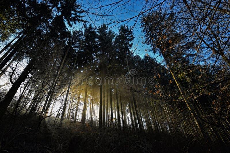 Ciemny o temacie las zdjęcia stock