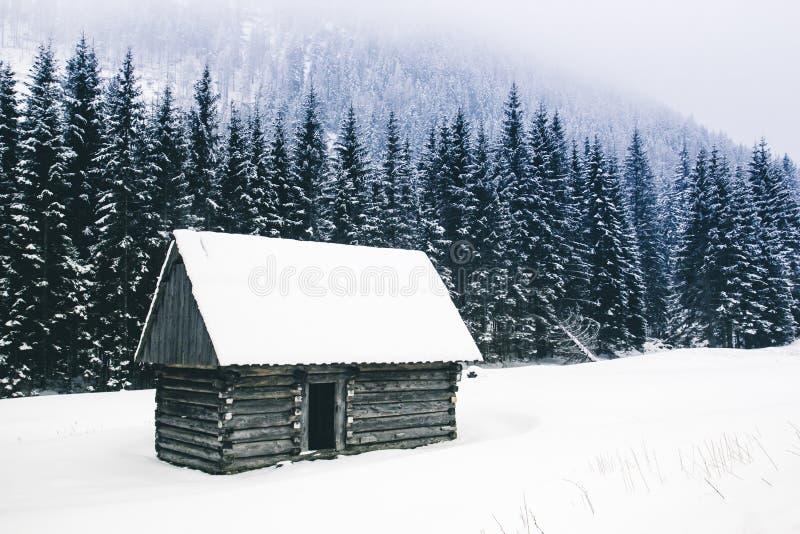 Ciemny ponury straszny halny zima krajobraz z iglastym dla obrazy royalty free