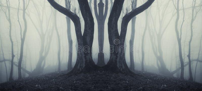 Ciemny symetryczny las z dziwacznym ogromnym drzewem i tajemniczą mgłą obraz stock