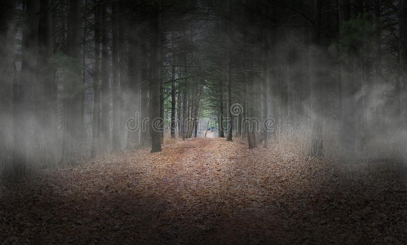 Ciemny Wods, las, mgła, tło, Surrealistyczny zdjęcia stock