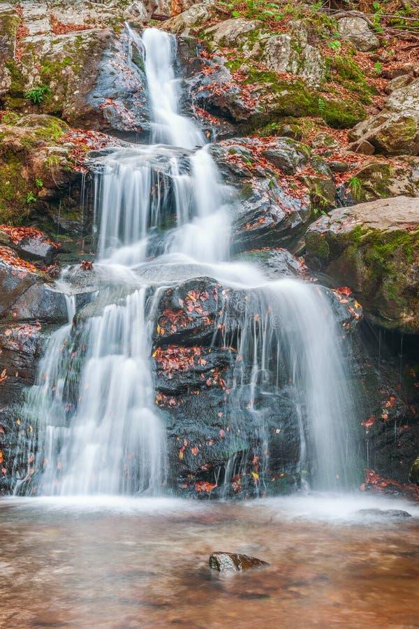 Ciemny wydrążenie Spada w jesieni Shenandoah park narodowy dziewictwo USA obraz royalty free