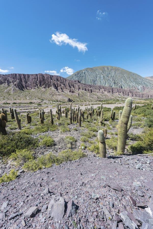 Cienaga Quebrada de Humahuaca, Jujuy, Argentina. royaltyfria foton