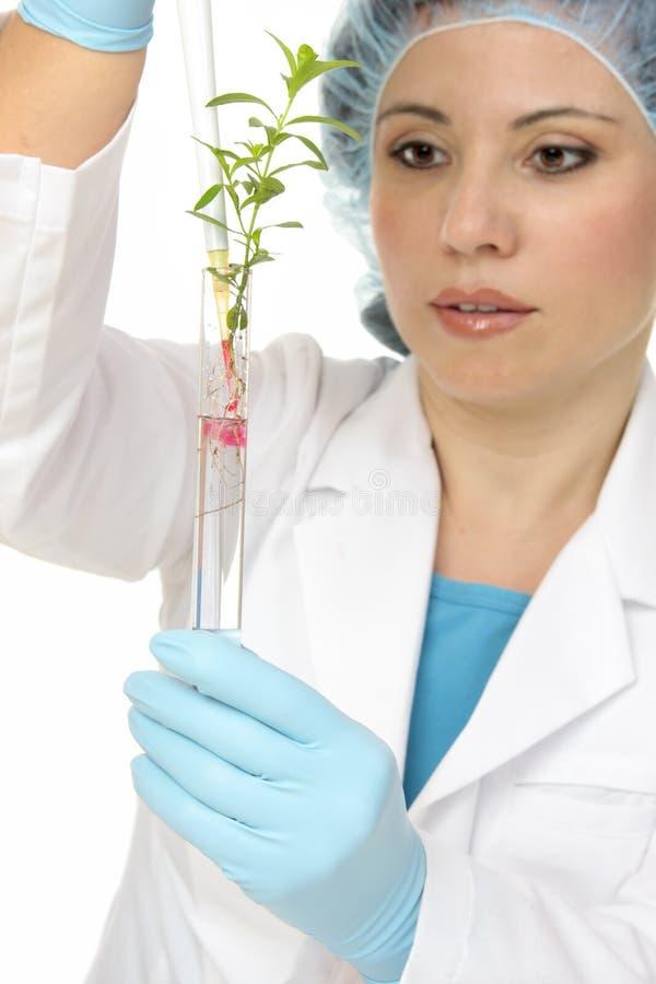 Ciencia de planta o agronomía foto de archivo