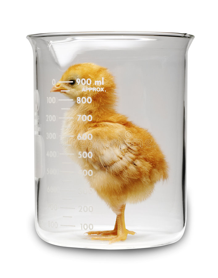 Ciencia del pollo foto de archivo libre de regalías
