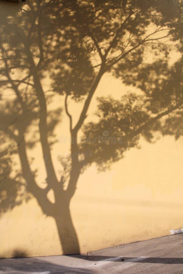 cienia drzewa ściana obraz stock