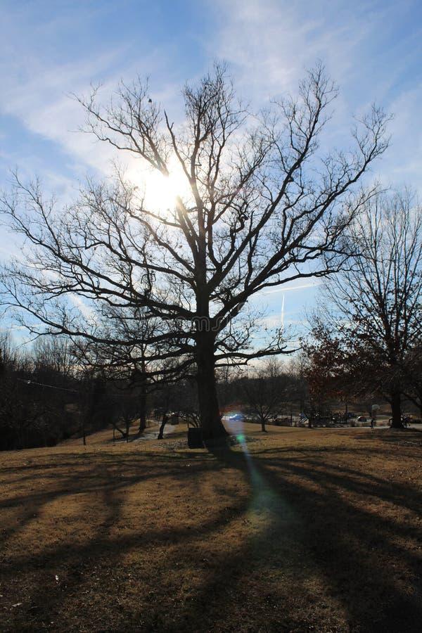Cienia drzewo fotografia stock