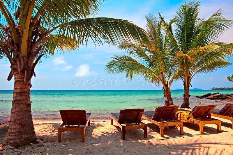 cienia palmowy drzewo fotografia royalty free