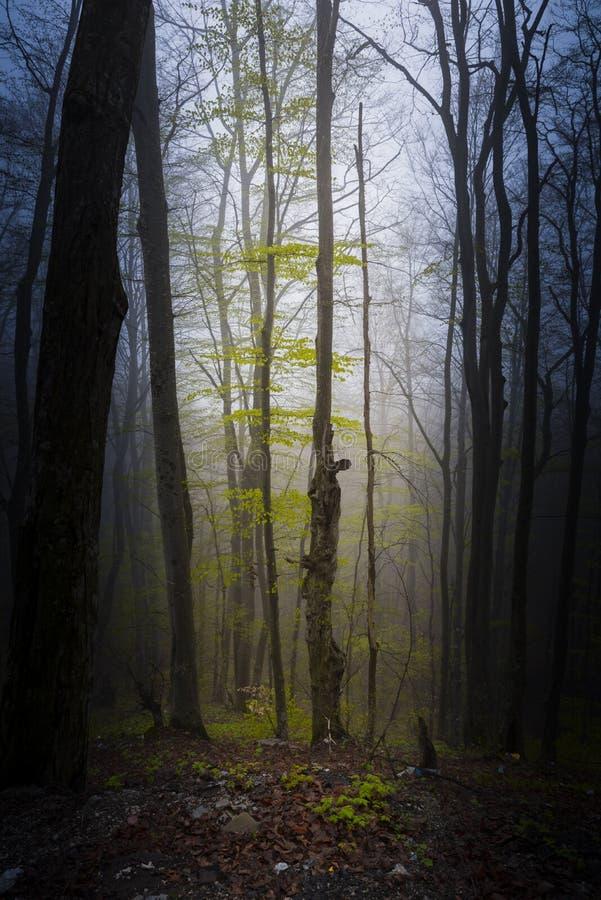 Cienie od ducha lasu zdjęcia stock