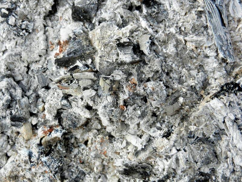 Cienie popielaty popiółu tło z dużym czarnym kawałkiem palący węgiel drzewny Przypalająca łupki tekstura po drewnianego ogniska w zdjęcia stock