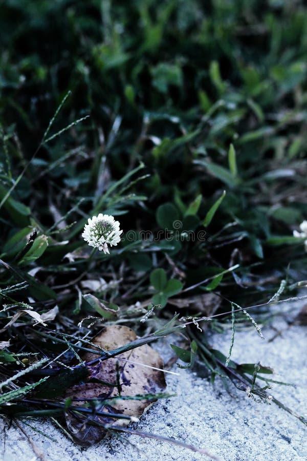 Cienie zieleń II zdjęcia stock