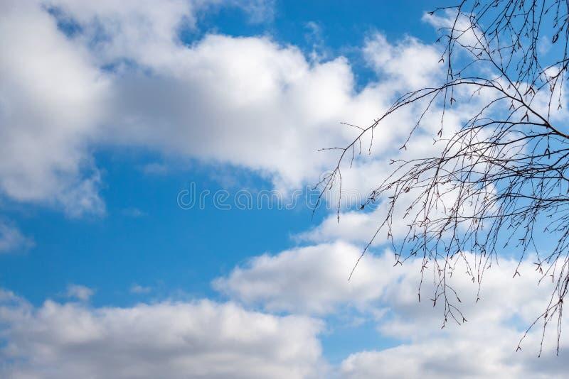 Cienieje gałąź brzoza bez liści przeciw błękitnemu chmurnemu niebu obraz royalty free