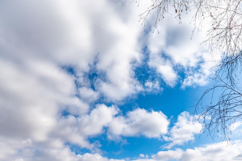 Cienieje gałąź brzoza bez liści przeciw błękitnemu chmurnemu niebu fotografia royalty free