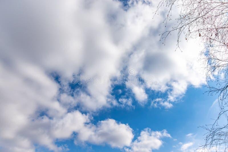 Cienieje gałąź brzoza bez liści przeciw błękitnemu chmurnemu niebu obrazy stock