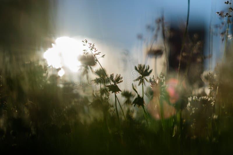 Cienki trawy zakończenie na pogodnym tle obraz royalty free