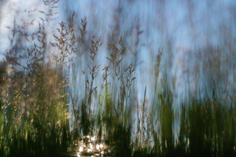 Cienki trawy zakończenie na pogodnym tle zdjęcie royalty free