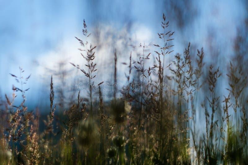 Cienki trawy zakończenie na pogodnym tle obrazy royalty free