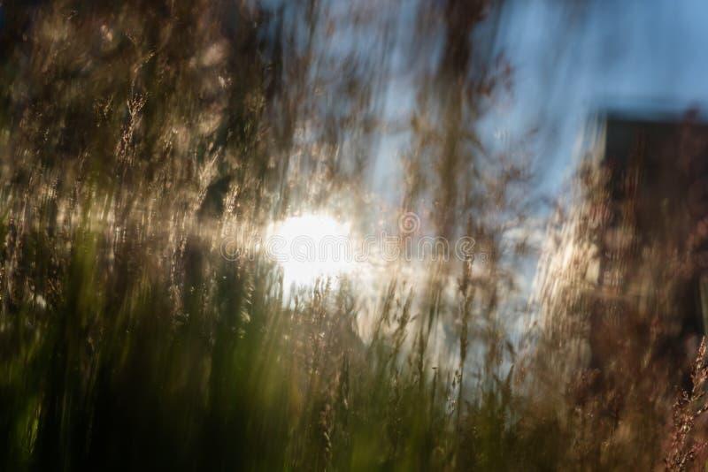 Cienki trawy zakończenie na pogodnym tle zdjęcia royalty free