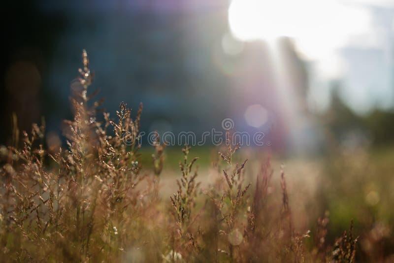 Cienki trawy zakończenie na pogodnym tle zdjęcie stock