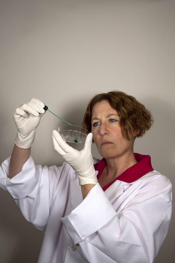 Científico con el plato de Petri imagen de archivo