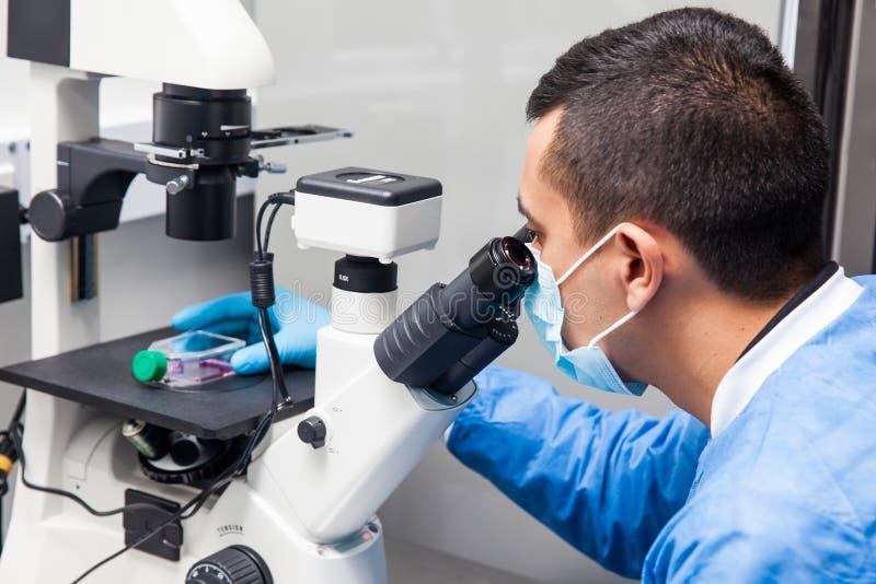 Científico de sexo masculino que mira el cultivo celular debajo del microscopio foto de archivo libre de regalías