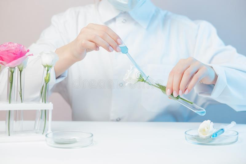 Científico está desarrollando cosméticos naturales extracto de aceite de aroma de flores Mancha en frasco de vidrio Biotecnología foto de archivo libre de regalías