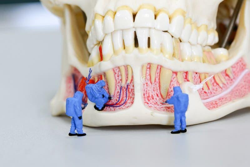 Científico miniatura de la gente en el trabajo con el modelo dental del diente fotos de archivo