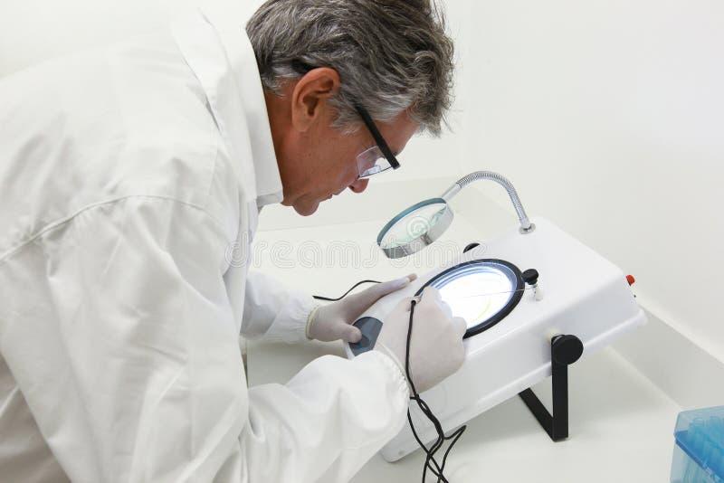 Científico que hace el análisis técnico y químico del maíz y del soyb imágenes de archivo libres de regalías
