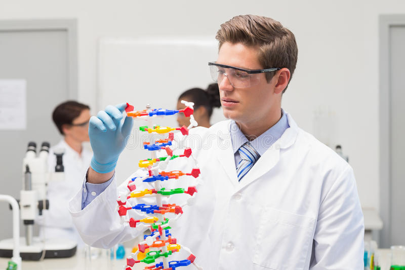Científico que hace la hélice de la DNA foto de archivo libre de regalías