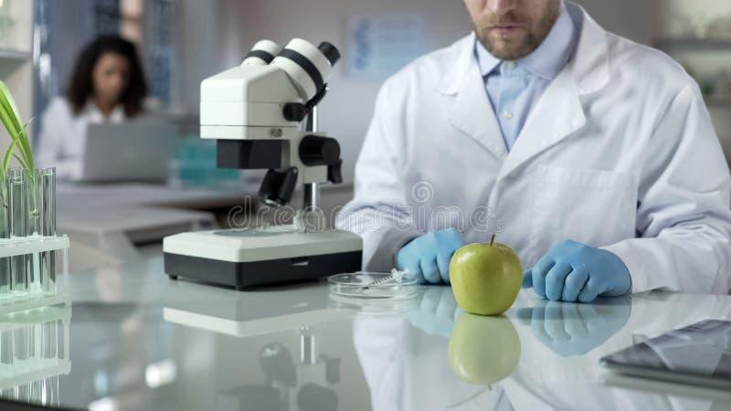 Científico que mira la muestra de la manzana del laboratorio, comprobando la reacción química, valor nutritivo fotografía de archivo libre de regalías