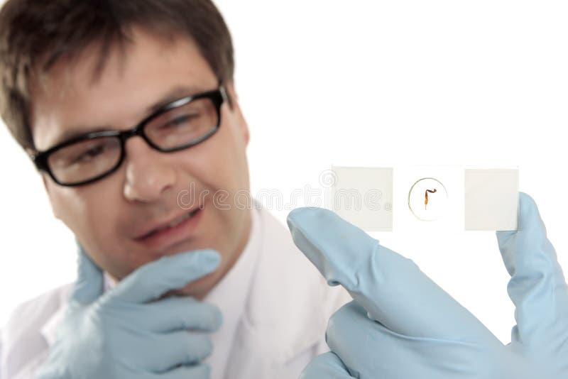 Científico que piensa sobre una diapositiva del microscopio imágenes de archivo libres de regalías