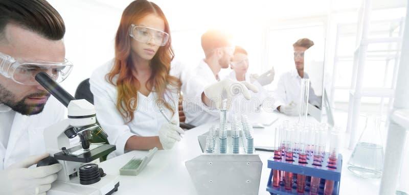 Científicos que examinan en el laboratorio con los tubos de ensayo fotografía de archivo libre de regalías