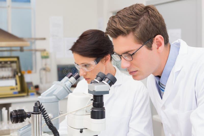 Científicos que miran atento en microscopios fotografía de archivo