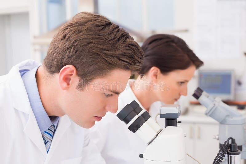 Científicos que miran atento en microscopios imagen de archivo libre de regalías