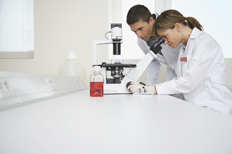 Científicos que usan el microscopio en laboratorio foto de archivo
