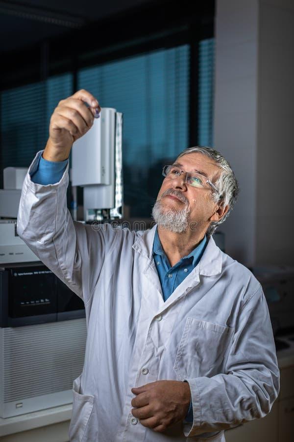 Cient?fico mayor en una investigaci?n de realizaci?n del laboratorio de qu?mica - mirada de muestras de la cromatograf?a de gas imágenes de archivo libres de regalías